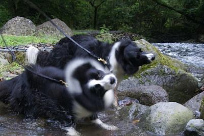 025吐竜の滝