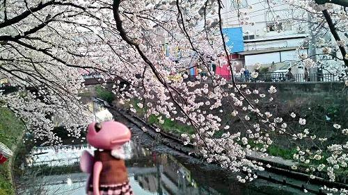 お花見エコ1