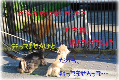 写真46(№71用)1