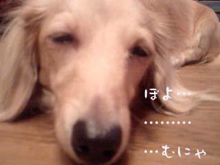 写真61(№82用)1