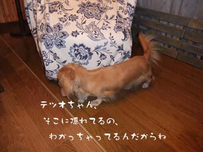 写真91(№91用)1