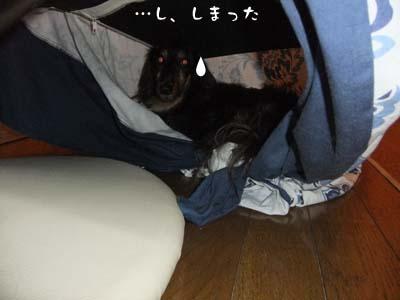 写真93(№91用)1
