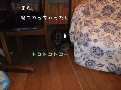 写真94(№91用)1