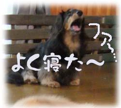 写真227(№132用)1