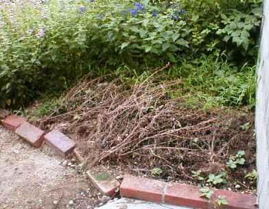 菜園・準備前2008.9.14