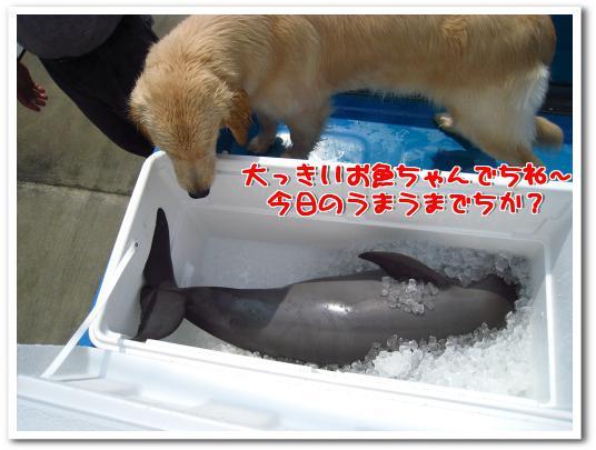 meguyan-a.1118@maroon.plala.or.jp