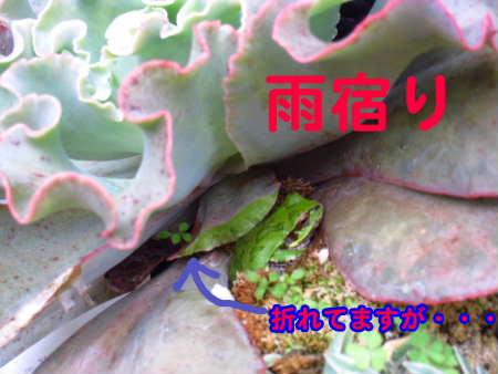 PIC00001_20091114212834.jpg