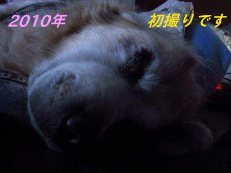 PIC00001_20100101221517.jpg