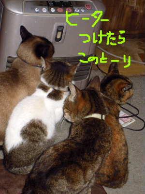 PIC00001_20100411010337.jpg