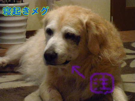PIC00003_20091114212833.jpg
