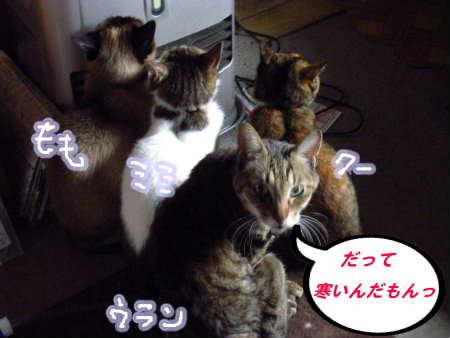 PIC00003_20100411010337.jpg