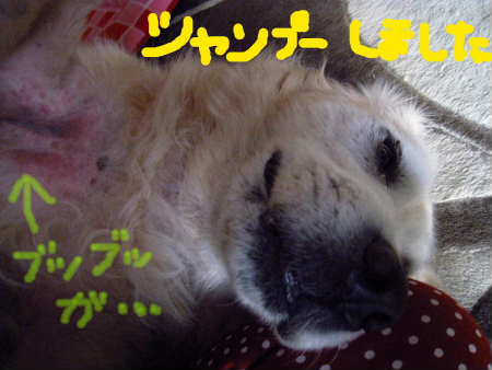 PIC00004_20091122215451.jpg