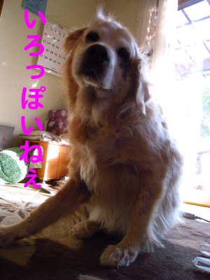 PIC00004_20091210220415.jpg