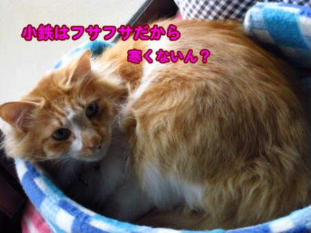 PIC00004_20100411010337.jpg