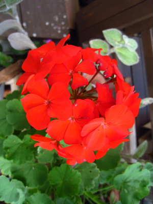 PIC00005_20091027022119.jpg