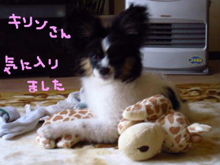 PIC00005_20100426211852.jpg