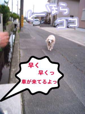 PIC00006_20091206215758.jpg