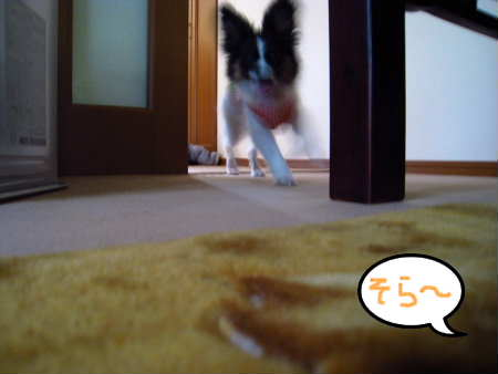 PIC00006_20100510003649.jpg