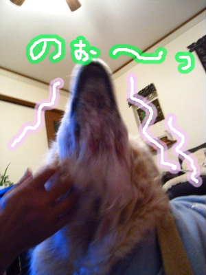 PIC00007_20100124212631.jpg