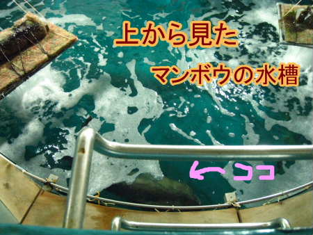 PIC00008_20100104223019.jpg