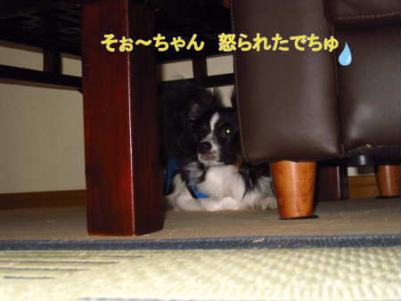 PIC00008_20100830000058.jpg