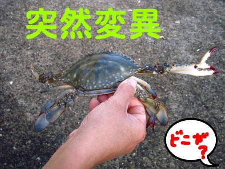 PIC00010_20091125215325.jpg