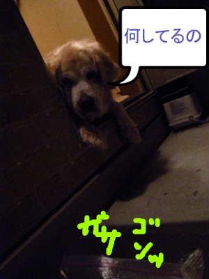 PIC00012_20091228231406.jpg