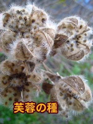 PIC00013_20091204160548.jpg