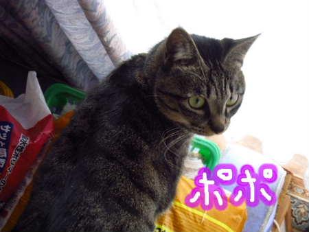 PIC00014_20091210220458.jpg