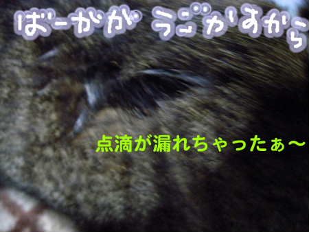 PIC00015_20091125215140.jpg