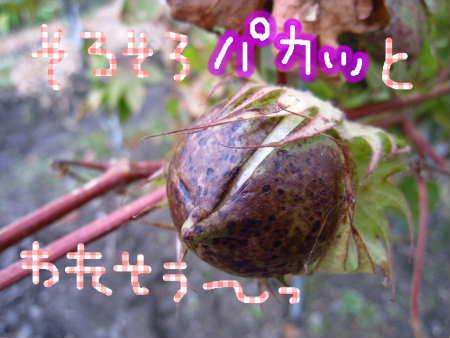 PIC00017_20091129215735.jpg