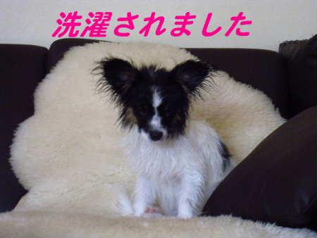 PIC00021_20100426205633.jpg
