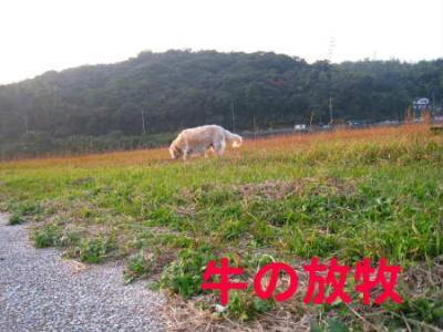 PIC00034.jpg