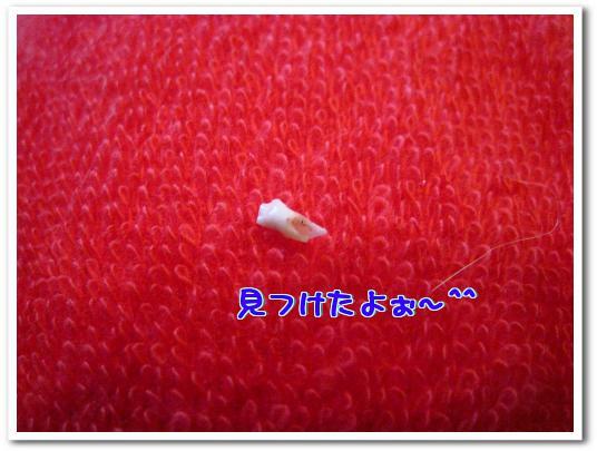 メルモの歯