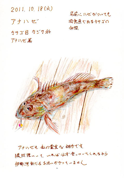20111018アナハゼs