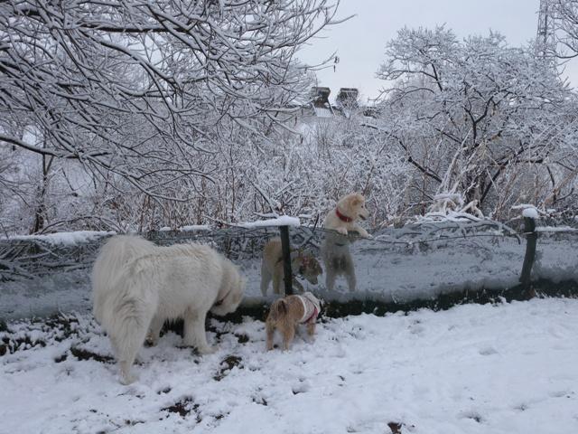 4・7雪のPG場にてDSCN2897