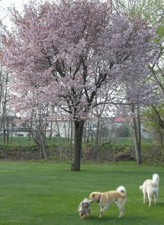 桜の下でDSCN3193
