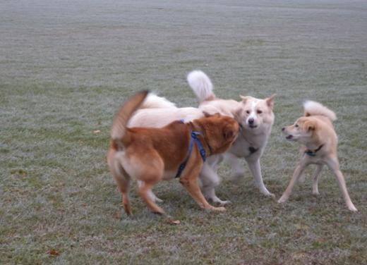 4犬組DSCN6016