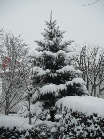庭の木DSCF3152