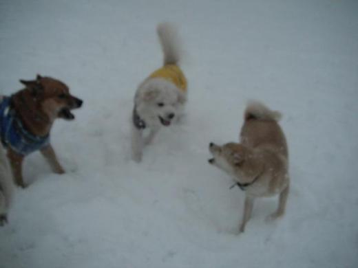 雪中コロンモコしちDSCF3212