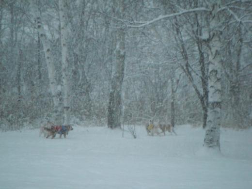 雪中2-2DSCF3195