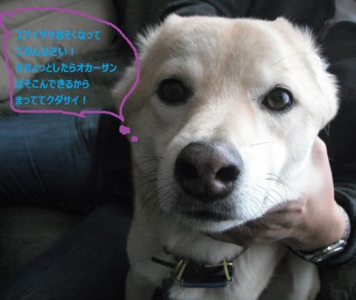 2011.年賀ブログコメント