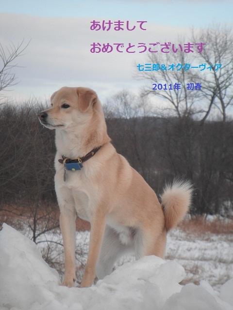 ブログ年賀2011DSCF3608
