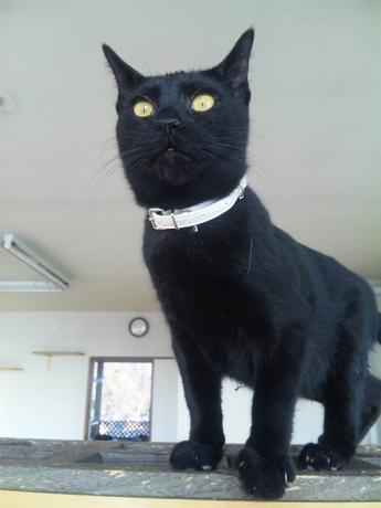 wish黒猫ちゃん110222_154343