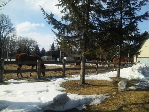 鹿追の馬110321_142102