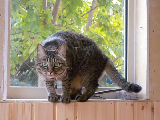 こっち見るおーチャン窓辺DSCN4352