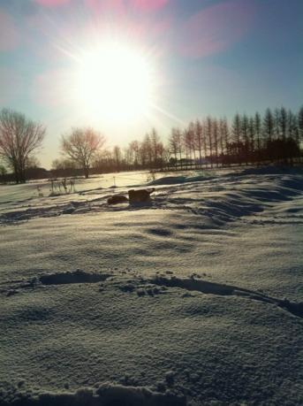 クリスマスラン太陽