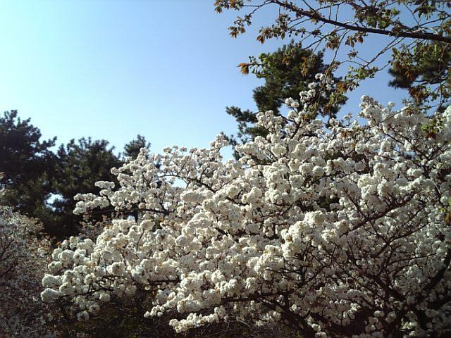 京都御苑20090411