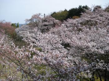 京都一望3