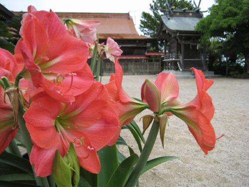 宮崎 青島神社19